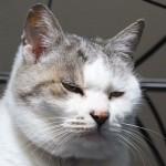 楽天から猫用おやつサンプルがいきなり届いたけど正直困る