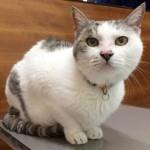 猫が便秘で苦しそうだったので動物病院で浣腸や血液検査した話