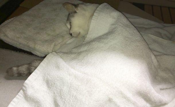 電気カーペットの上で寝ている様子。